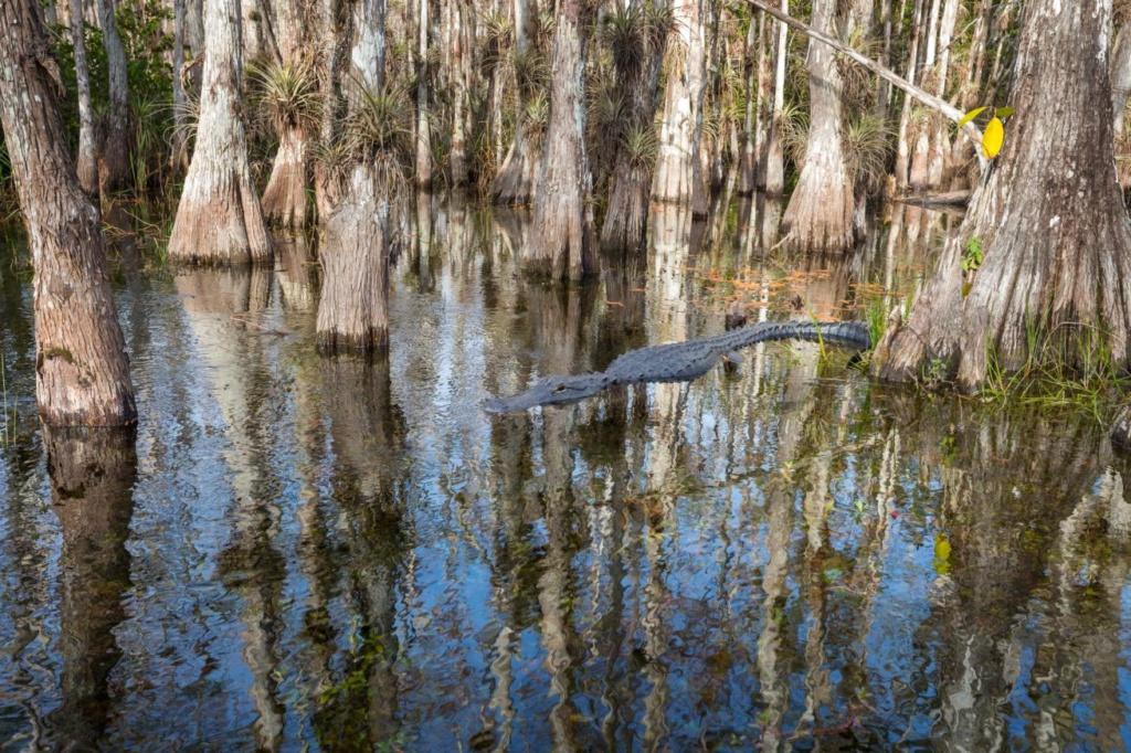 Le parc national des Everglades