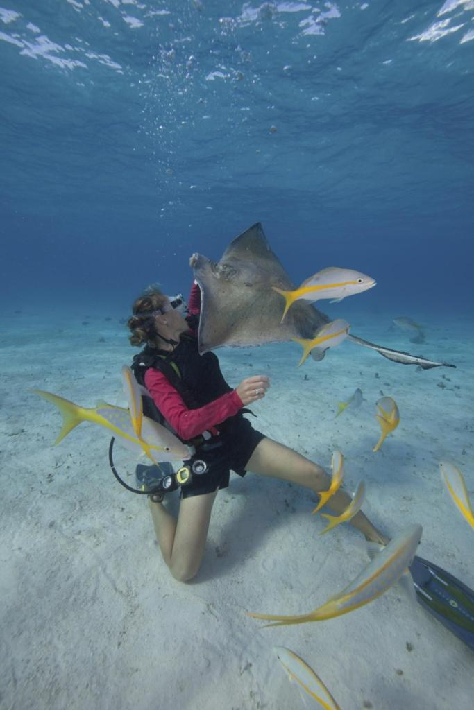 Plongeur nourrissant une raie sous l'eau