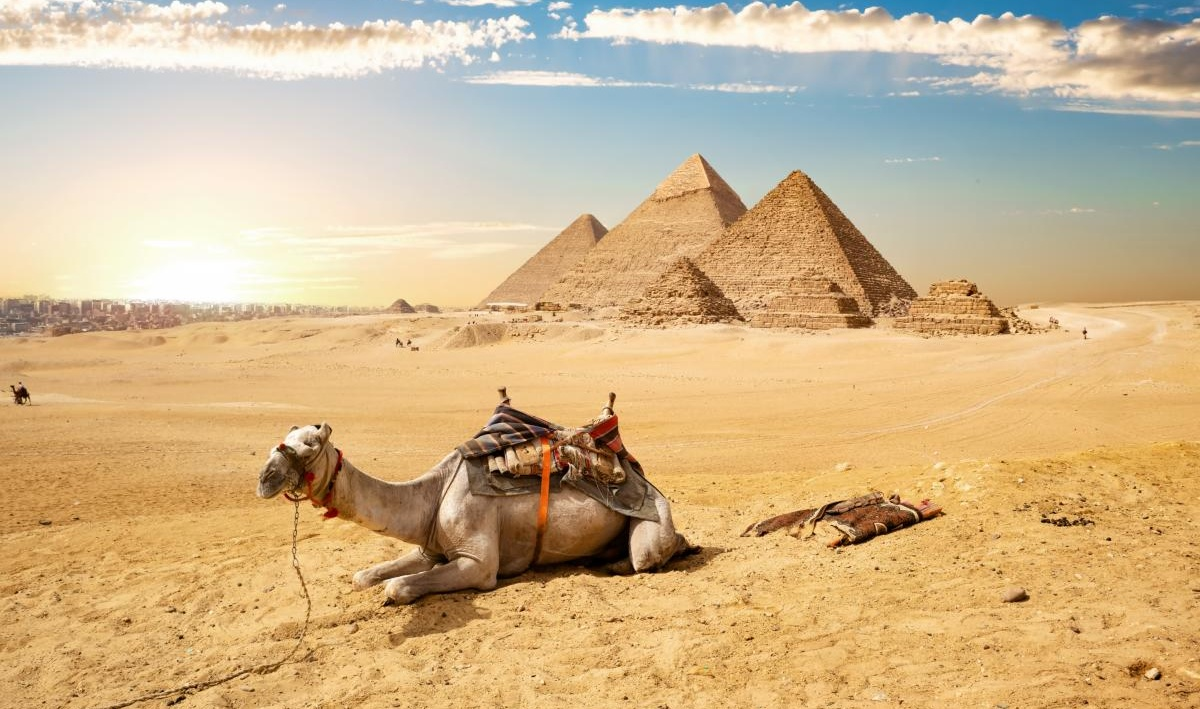 Chameau et Pyramides