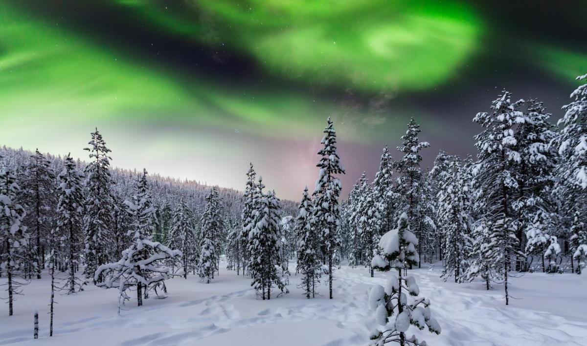 Forêt d'hiver la nuit sous les aurores boréales. Finlande