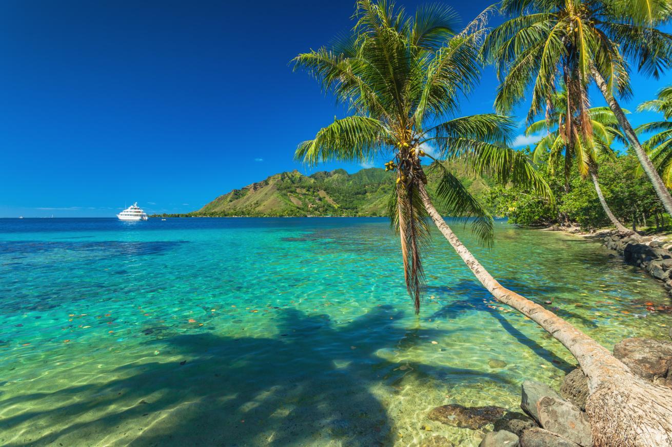 Palmiers et baie tranquille à Moorea à Tahiti