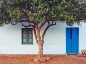 Un olivier devant une façade typique méditerranéenne
