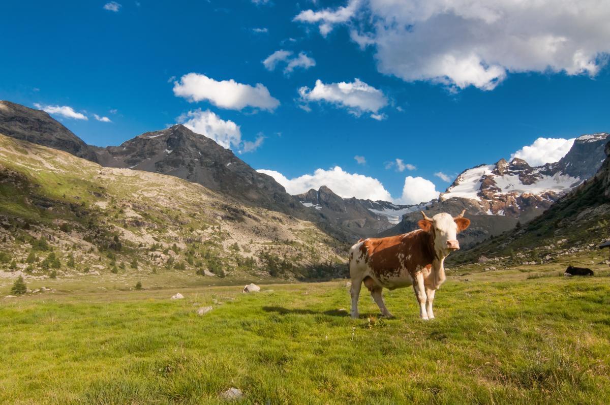 les spécialités culinaires de Savoieles spécialités culinaires de Savoie