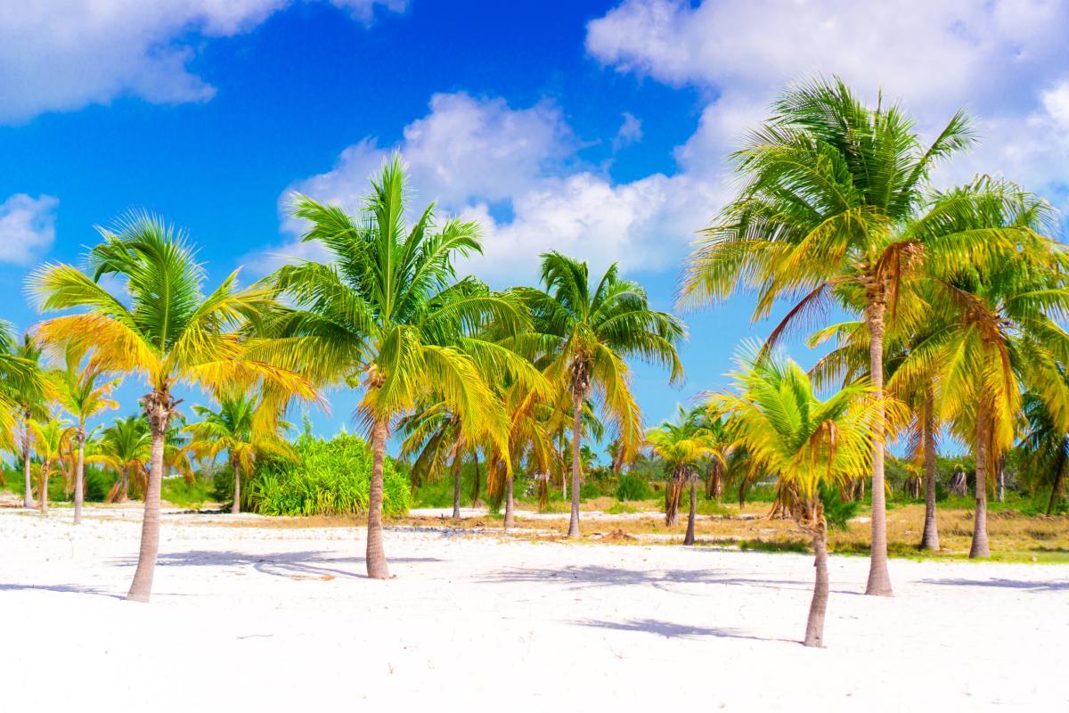 Palmiers sur plage de sable blanc cuba
