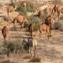 Sahel : Le rôle de la culture nomade dans la transition écologique